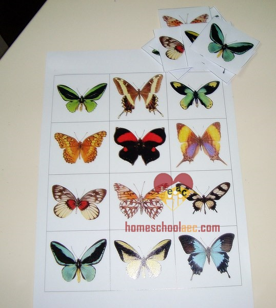 butterfly theme activity