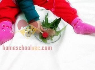 dinosaur eggs for kids